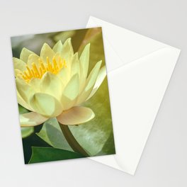 White Waterlily Stationery Cards