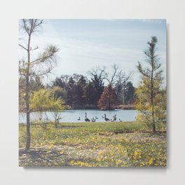 Migrate   Nature Landscape Photography of Birds in Fall Autumn Leaves Trees Metal Print