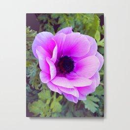 Pink Poppy Anemone I Metal Print
