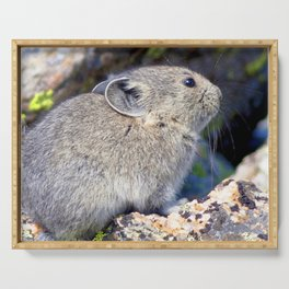 Watercolor Pika 08, Trail Ridge Road, RMNP, Colorado, Springtime Snow Melt Emergence Serving Tray