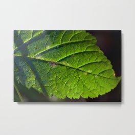 Green Sunny Leaf Metal Print