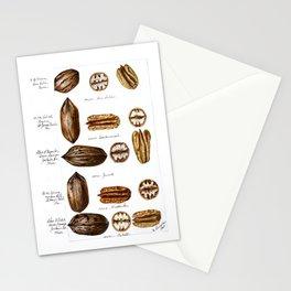Nuts - Fruit Illustration Stationery Cards