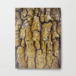 200 year old oak tree Metal Print