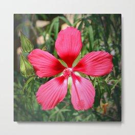 Scarlet Swamp Hibiscus Metal Print