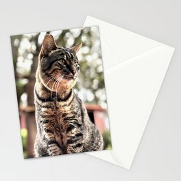 Forest Kitty (Lanai Cat Sanctuary) Stationery Cards