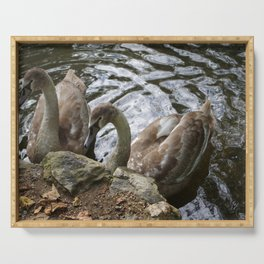 Cygnets Serving Tray