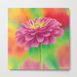 Zinnia flower colored pencil drawing Metal Print