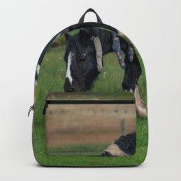 Gypsy Vanner Horse 0188 - Colorado Backpack