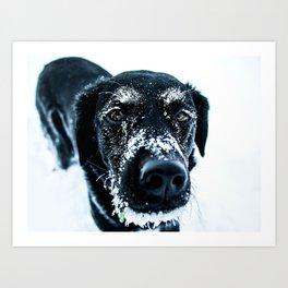 Snow Dog // Cross Country Skiing Black and White Animal Photography Winter Puppy Ice Fur Kunstdrucke