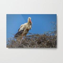 Nesting Stork  in Rabat Metal Print