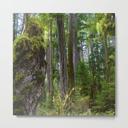 Cathedral Grove, Vancouver Island BC Metal Print