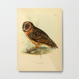 The Zoology of the Voyage of HMS Beagle 1840 - Birds 4: Strix punctatissima / Galapagos Barn Owl Metal Print