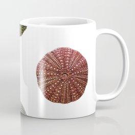 Sea Urchins Scheleton Dead Empty Shells Perforated Echinoidea Coffee Mug