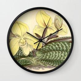 Paphiopedilum concolor Wall Clock