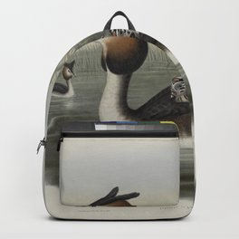 334 Podiceps cristatus. Great Crested Grebe Backpack