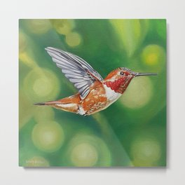 Rufous Hummingbird Painting Metal Print