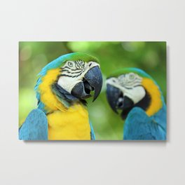 Blue-and-yellow Macaw Metal Print