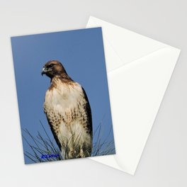 Red-Tailed Hawk on Watch at Foothill and B Street Stationery Cards