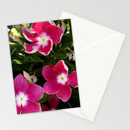 Red and Pink Garden Flowers in Dappled Light Stationery Cards