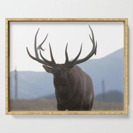Watercolor Elk Bull 48, Estes Park, Colorado, Rage Serving Tray