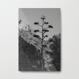 Blooming Century Plant in Black and White Metal Print