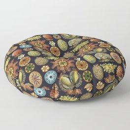 Ernst Haeckel Sea Squirts Ascidiae Black Background Floor Pillow