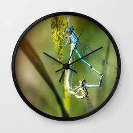 Two Dragonfly insect mating perched on stem of weed Wall Clock