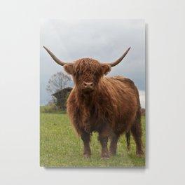 Highland Cow #4 #wall #art #society6  Metal Print