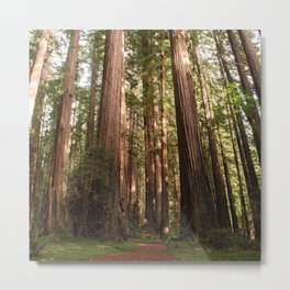 Redwood Forest Photography, Northern California Humboldt County Art, Magical Enchanted Woodland, Landscape Home Decor, Coastal Redwoods Metal Print