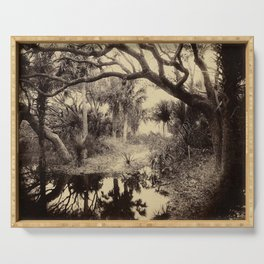 Live Oaks And Palmetto Everglades Florida 1886 - Vintage Photo By George Barker Serving Tray