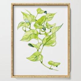 Devils Ivy Illustration Serving Tray