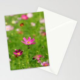 Pink Cosmos in Sunshine Photography Stationery Cards