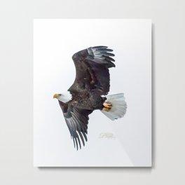 Eagle soaring Metal Print