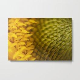 Extreme Macro Photo of a beautiful Sunflower. Metal Print