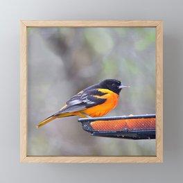 Oranges for the Oriole Framed Mini Art Print