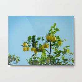 Lemon Treetop Metal Print