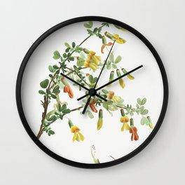Robinia chamlagu from Traite des Arbres et Arbustes que lon cultive en France en pleine terre (1801- Wall Clock