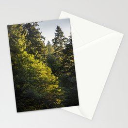 Beautiful Trees / 17 Stationery Cards
