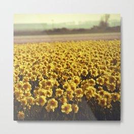 Narcissus field #2 Metal Print