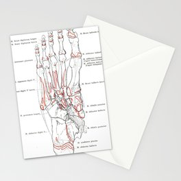 Spalteholz' Hand-Atlas of Human Anatomy (1906) - Bones of the Right Foot II Stationery Cards