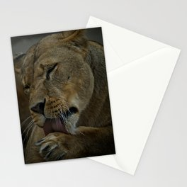 Lioness Licking Her Paw Stationery Cards