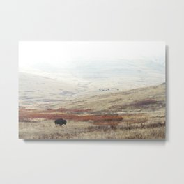 Lone Bison on The National Bison Range in Montana Metal Print