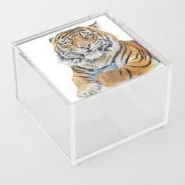 Too Early Tiger Acrylic Box