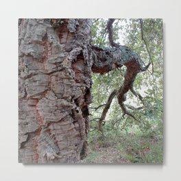 Cork Oak Tree Forest 1 Metal Print