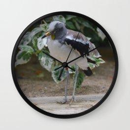 National Aviary - Pittsburgh - White Headed Wattled Lapwing Wall Clock