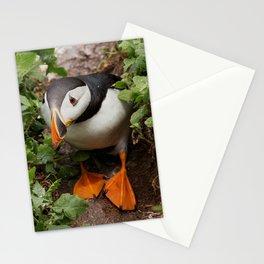 Wildlife ocean puffin birds portrait Stationery Cards