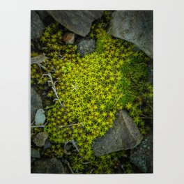 The tiny green forest Poster