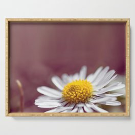 Daisy small flower macro with purple background copy space Serving Tray