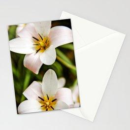 White Oriental Poppy Stationery Cards