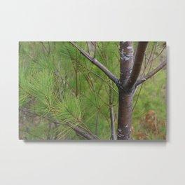 Patterns of Pine Metal Print